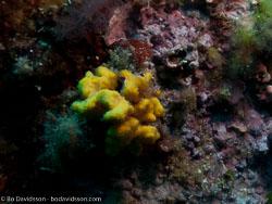 BD-110625-Dubrovnik-6255218-Coral.jpg