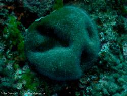 BD-110625-Dubrovnik-6255232-Coral.jpg