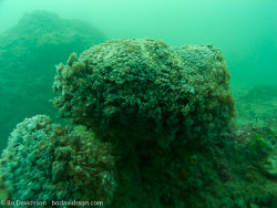 BD-090103-Hainan-1032236-Coral.jpg