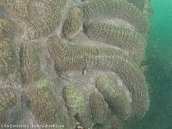BD-090103-Hainan-1032268-Coral.jpg