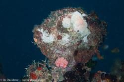 BD-130710-Maldives-0019-Kuda-Giri.jpg