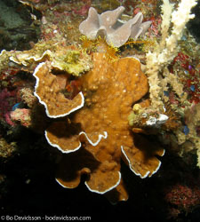 BD-060407-Moalboal--Anthozoa--Corals--Koralldjur.jpg