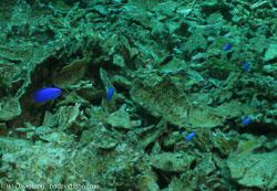 BD-060408-Pescador-Island--Fish.jpg
