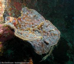 BD-060409-Moalboal--Anthozoa--Corals--Koralldjur.jpg