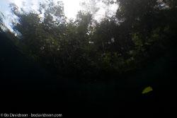 BD-111125-Raja-Ampat-5276-Landscape.jpg