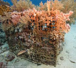 BD-071210-Sharm-100782-Coral.jpg