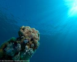 BD-071210-Sharm-100788-Coral.jpg
