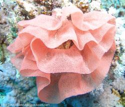 BD-071214-Tiran-141843-Coral.jpg