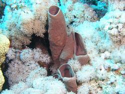 BD-071215-Sharm-151919-Coral.jpg