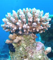 BD-071215-Sharm-151950-Coral.jpg