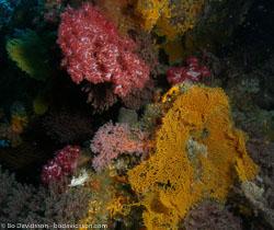 BD-070402-Similan--Coral-10.jpg