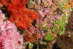 BD-070402-Similan--Coral-12.jpg