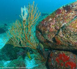 BD-070402-Similan--Coral-8.jpg