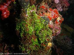BD-070402-Similan-4020163-Coral.jpg