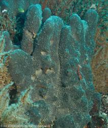 BD-070403-Similan--Coral-3.jpg