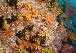 BD-070404-Similan--Coral-2.jpg