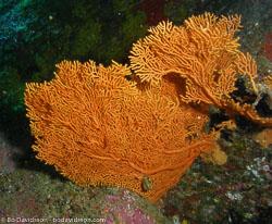 BD-070405-Similan--Coral-3.jpg