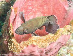 BD-070410-Ao-Nang--Fish.jpg