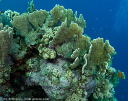 BD-090405-St-Johns-4052544-Coral.jpg