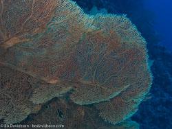 BD-090405-St-Johns-4052552-Coral.jpg
