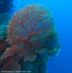 BD-090405-St-Johns-4052556-Coral.jpg