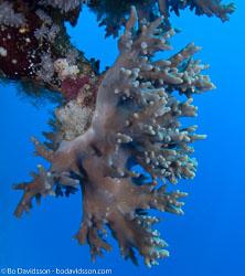 BD-090405-St-Johns-4052600-Coral.jpg