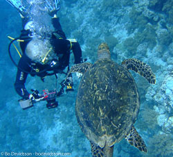 BD-090406-St-Johns-105-Turtle.jpg