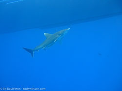 BD-090406-St-Johns-113-Fish.jpg