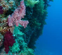 BD-090406-St-Johns-4062838-Coral.jpg