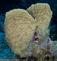 BD-090406-St-Johns-4062866-Coral.jpg