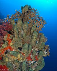 BD-090407-St-Johns-4072884-Coral.jpg