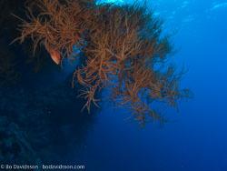 BD-090407-St-Johns-4072904-Coral.jpg