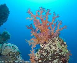BD-090409-Marsa-Alam-4093111-Coral.jpg