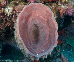 BD-080402-Bunaken-4020884-Coral.jpg
