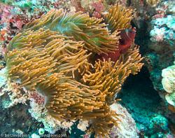 BD-080407-Bunaken-4071459-Fish.jpg