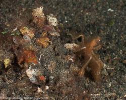 BD-090926-Lembeh-9264255-Shellfish.jpg