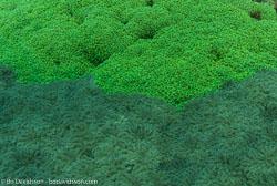 BD-090927-Lembeh-9274523-Coral.jpg