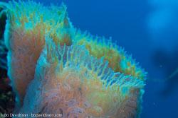 BD-101208-Cozumel-2838-Coral.jpg