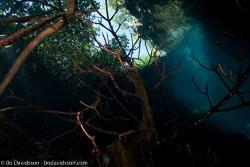 BD-101210-Cenotes-3002-Cavern.jpg